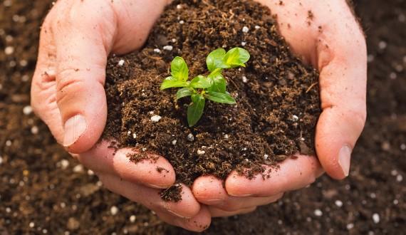 Biodegrablehands