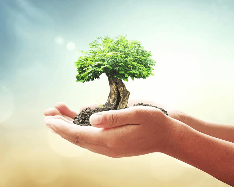 tree-inhands